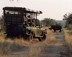 Kruger National Park - Half day Safari(6 - 8 hours)