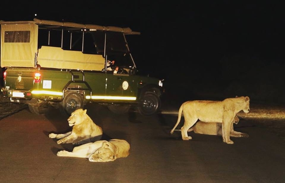 Night Drive Open Vehicle Kruger Park (Off site)
