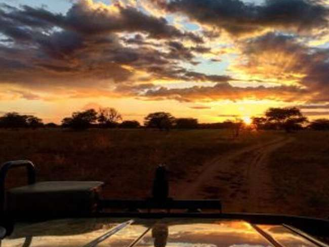 Kruger National Park Sunrise Safari(+- 4 Hours)