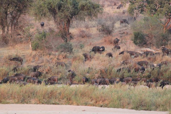 Do your own game drives